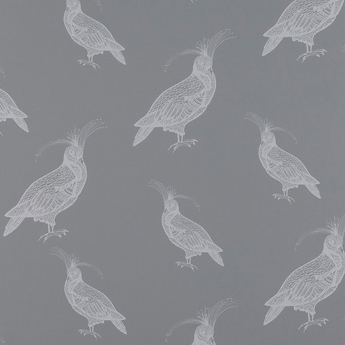 FANCY PIGEON | SILVER FROSTING ON THUNDER GREY
