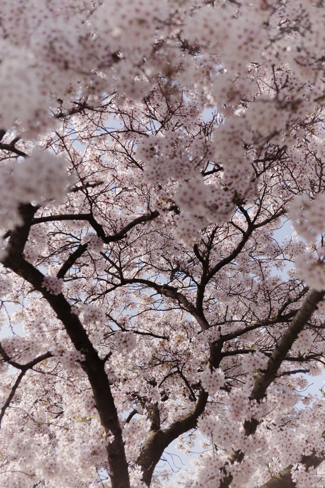 in love with these Blossomtree's | romyvanleeuwenfotografie