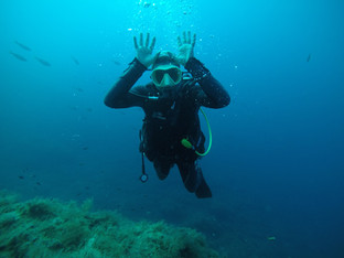 Lapinou marin