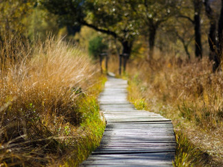Stride to Wellness with Walking Therapy