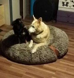 Dany Kaiser Ferienhunde