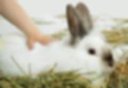 פעמוני-רוח: מרכז לשיקום הדדי של ילדים ובעלי-חיים