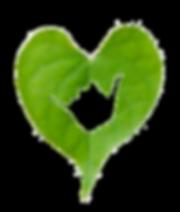 aloha feuille verte coeur tampon.png