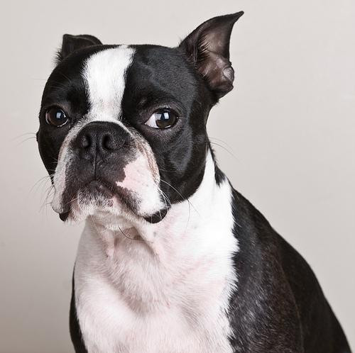 Classifying Dog Breeds Through Color Histograms