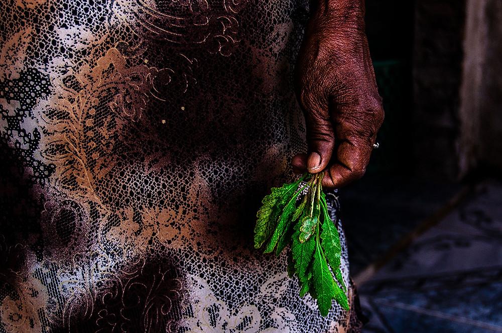 Fotografia da mão e uma benzedeira segurando folhas, na comunidade Pai João, em Euclides da Cunha/BA.