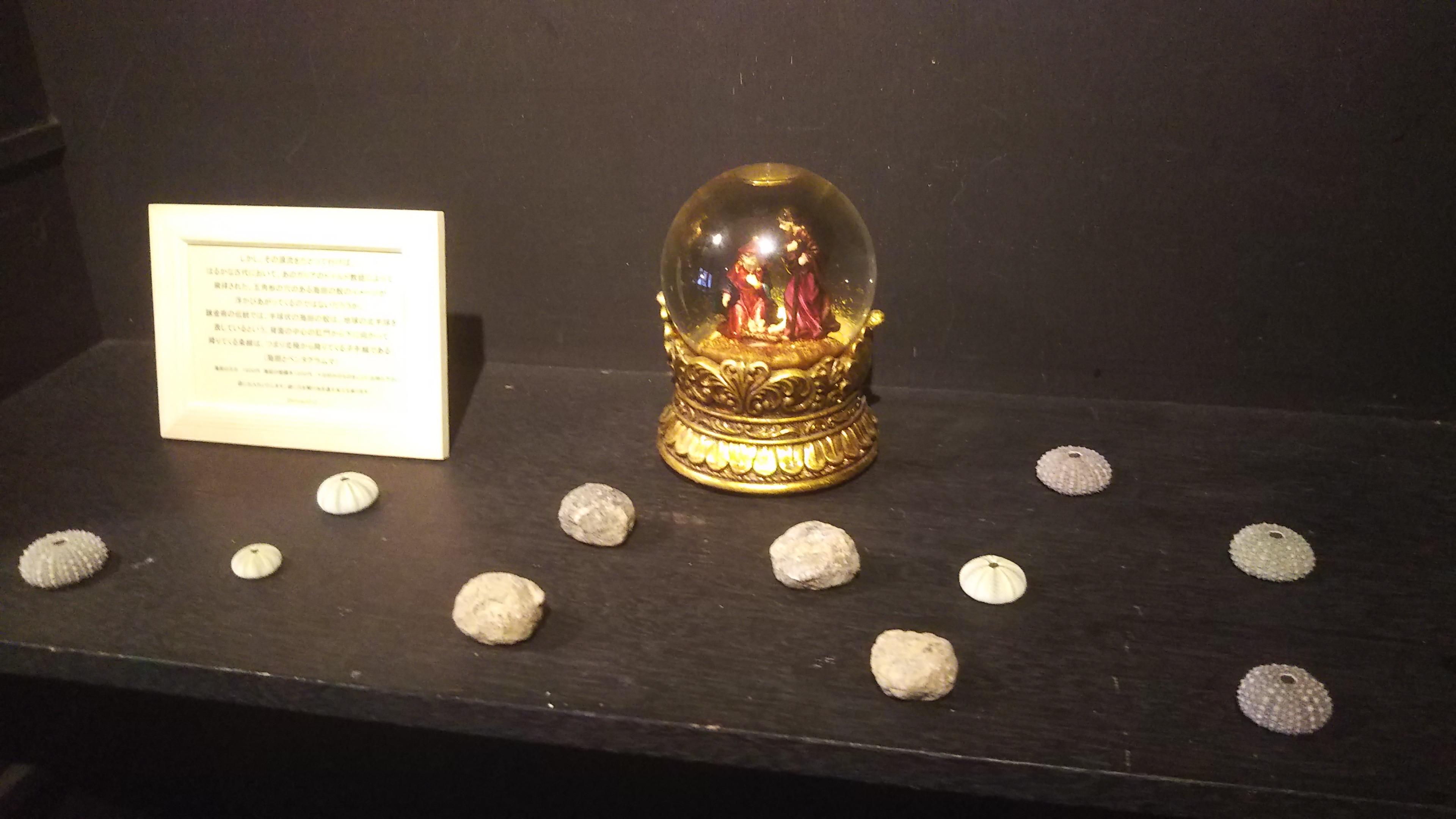 sea urchin(fossil and specimen )