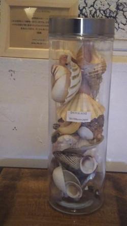 coquillage specimen (zero)