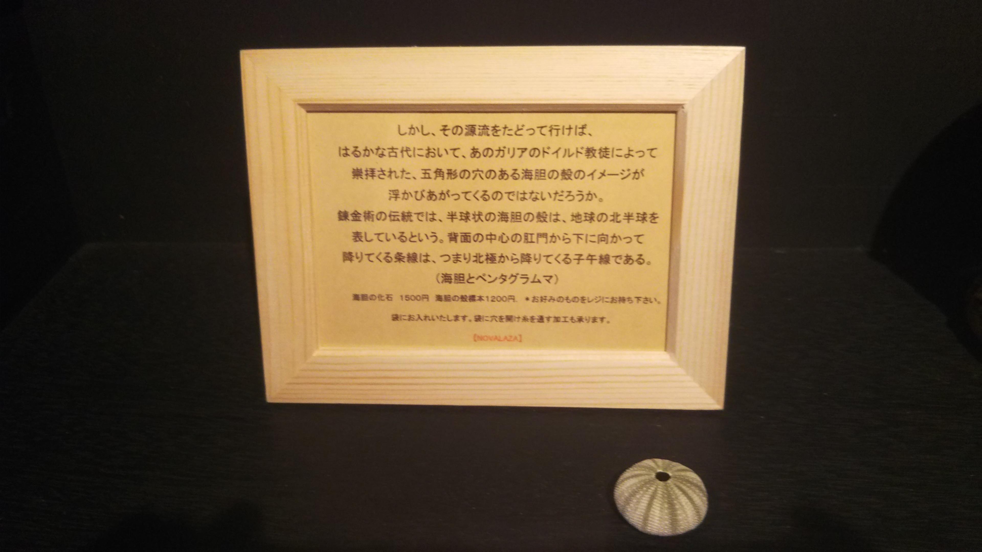 sea urchin(specimen )