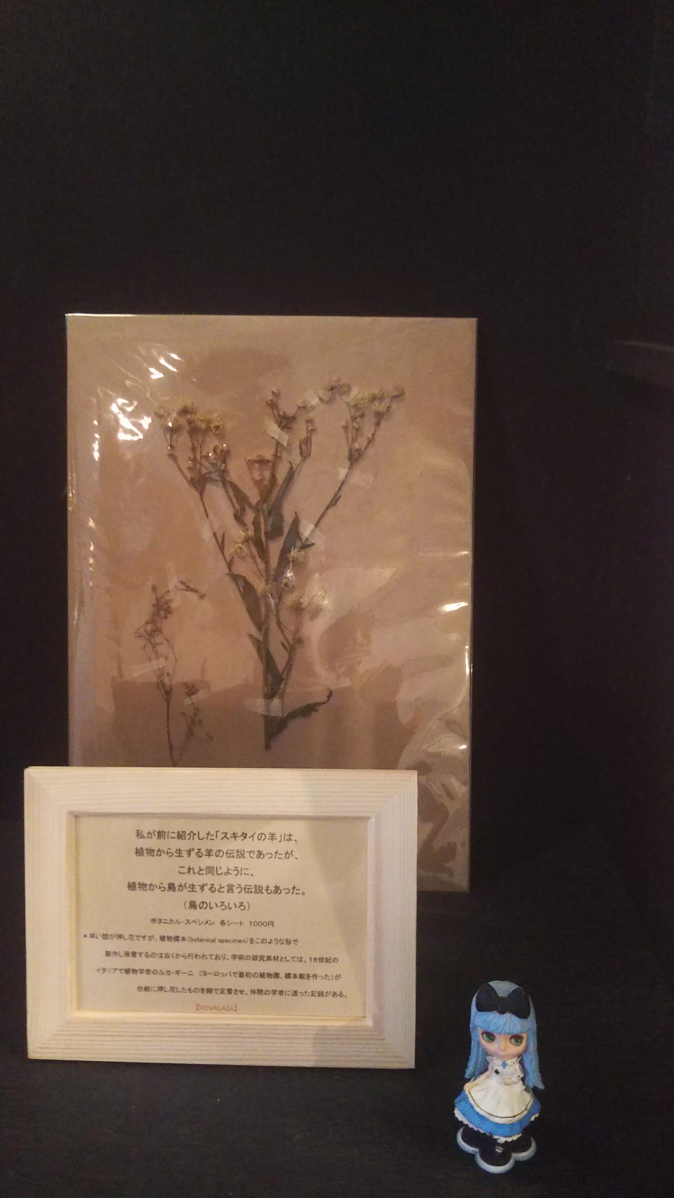botanical specimen