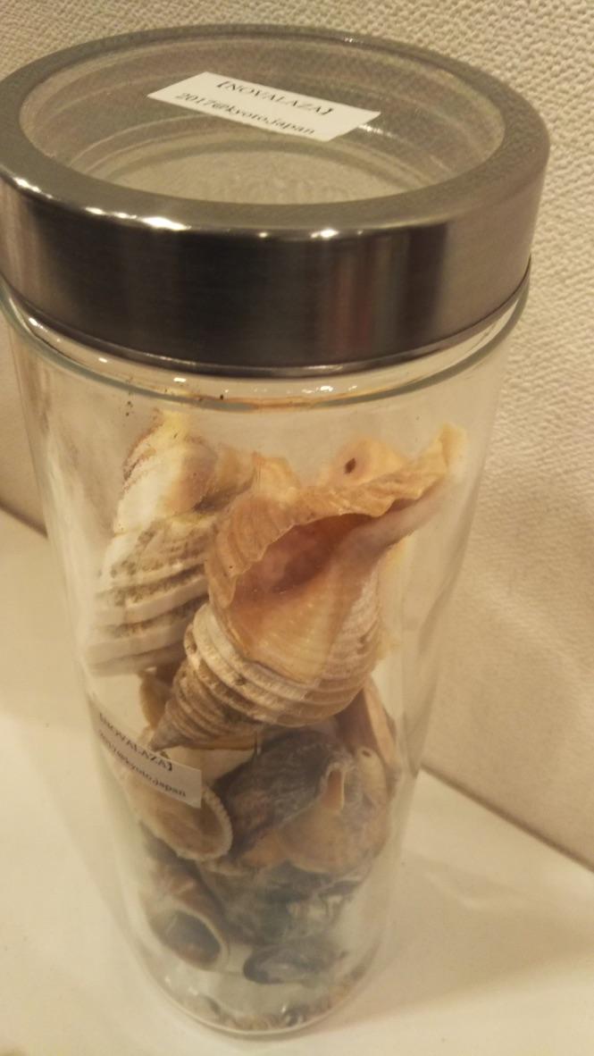 coquillage specimen 0