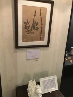 botanical specimen(one),sculpture