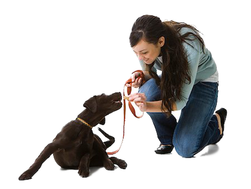 treats-on-leash.png