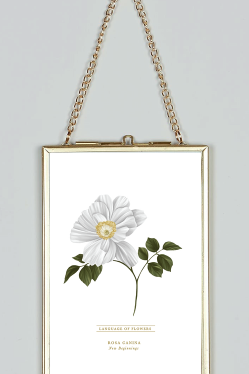 Botanical Prints | Flowers | English Flowers | Interior Prints | Home Decor