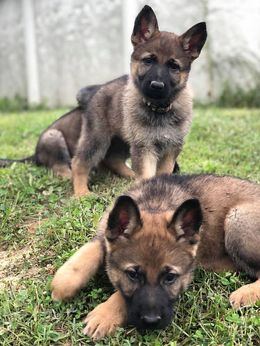 Kim's Puppies.jpg