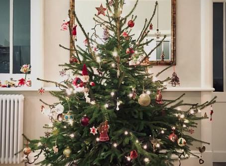 The Christmas bush