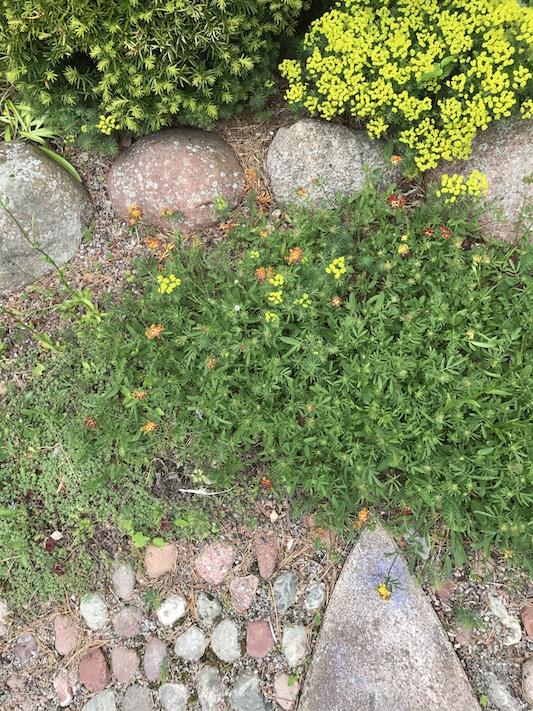 Grusträdgård_Falun_7