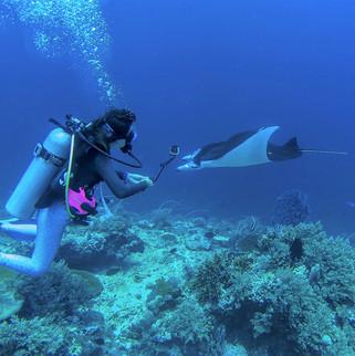 manta rays tubbataha reef Coopers Naraya
