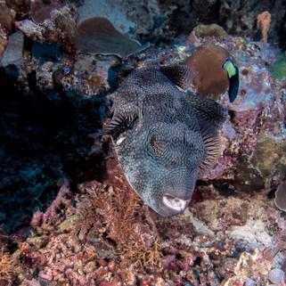 Tubbataha Reef Coopers Narayana (8).jpg
