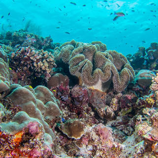 Tubbataha Reef Coopers Narayana (5).jpg