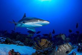 Coopers Narayana Tubbataha diving