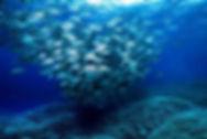 Tubbataha Diving Coopers Narayana