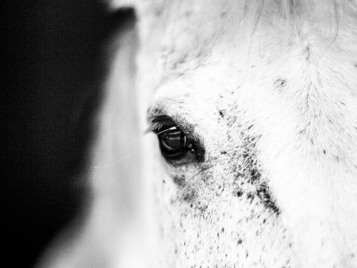 Being a voice for your horse