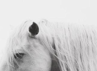 Healing traumatised horses