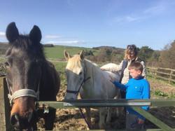 Teaching equine energy healing