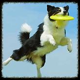 Adestramento sem submissão com a PCS - Adestramento de Cães Salvador