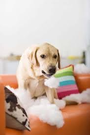 cão com neurose