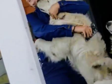 Transtorno de Ansiedade Canina