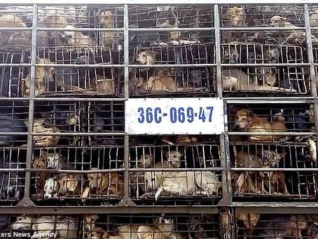 China anuncia que vai proibir o consumo de animais selvagens e domésticos como cães e gatos