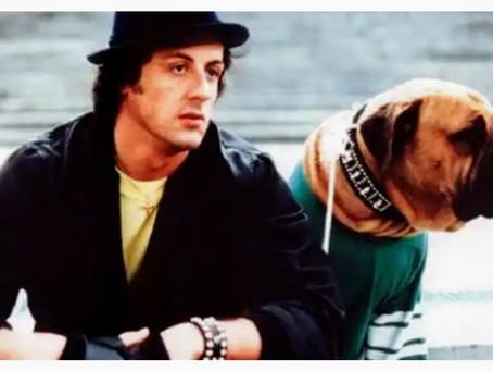 A Emocionante História de Sylvester Stallone e seu Cão Butkus