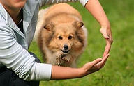 treinamento de cão sem submissão