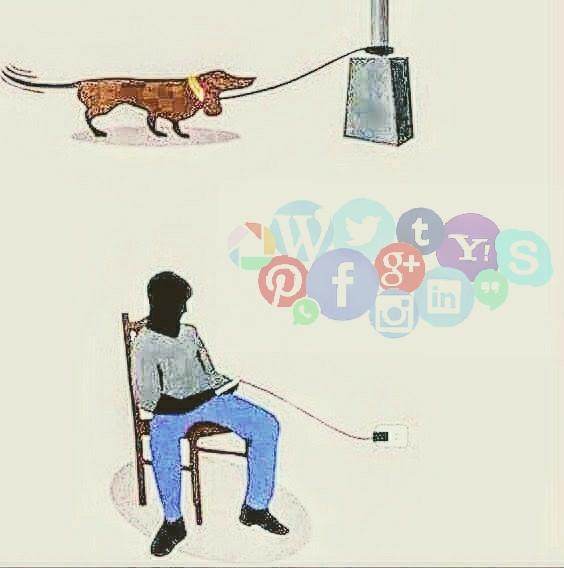 Pessoas Conectadas x Cães Abandonados