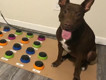 Cão aprendeu a se comunicar com 29 palavras segundo sua tutora humana.