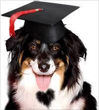 Cães mais inteligentes.