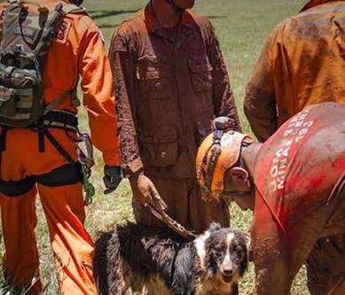 Morre Thor, o cão farejador border collie que atuou em resgates de Brumadinho e Mariana