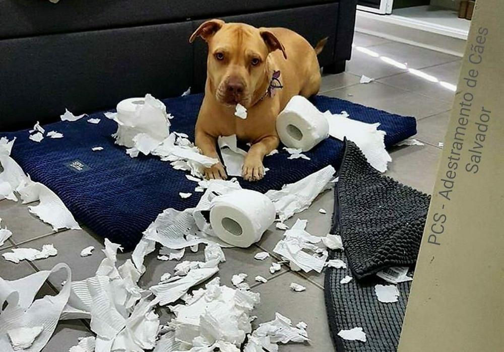 Cães que destroem objetos