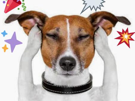 Seu cão tem medo de fogos de artifício? Confira essas dicas: