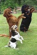 Serviço de Adestramento sem Submissão. Método Exclusivo sem Punição e sem coagir o animal.