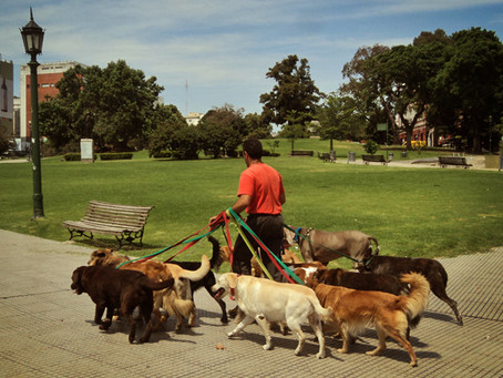 Passeador de Cães (Dog Walker)