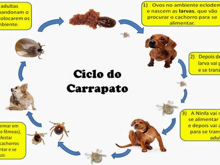 Como tratar carrapatos nos cães