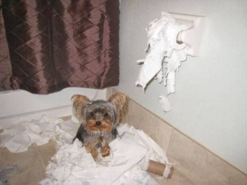 cão bagunceiro