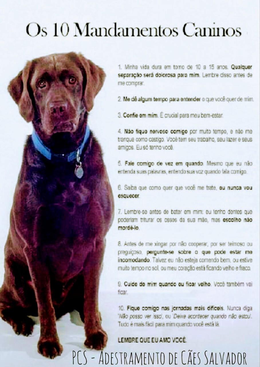 Como Cuidar de Cachorros