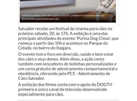 Festival de cinema para cães acontece em Salvador