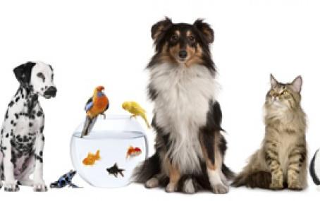 Pet Sitter ou babá de Animais domésticos