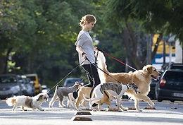 serviço de passeador de caes ou dog walking em salvador