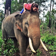"""Cat in Thailand connecting with her life animal """"Someone the Elephant"""""""
