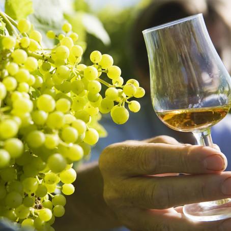 A la découverte de Cognac et son œnotourisme
